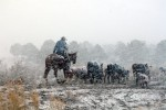 Winter Watch
