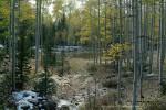 Aspen Stream