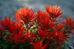 A Burst of Red