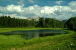 Meadow Pond