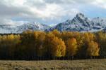 Aspens and Peaks