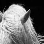 Equus Essence