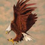 Our Bird