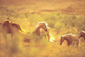 alltheprettyhorses