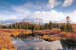 beaver-ponds