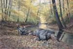 Acorn Hunters