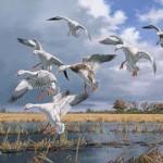 Texas Light - Snow Geese