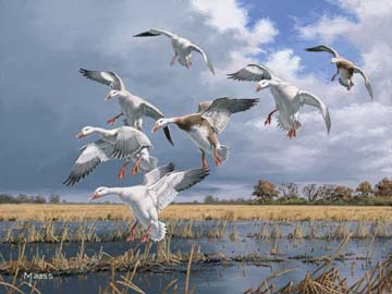 Texas Light - Snow Geese