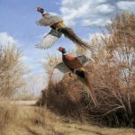 Island Treasures - Pheasants