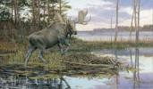 Backwater Bull